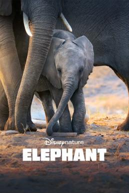 Elephant (2020) Disney+ อัศจรรย์ชีวิตของช้าง